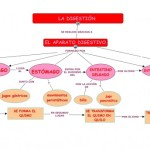 Cuadros sinópticos sobre la digestión