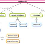 Cuadros sinópticos sobre nutrición: Definición de nutrición y su diferencia con la alimentación