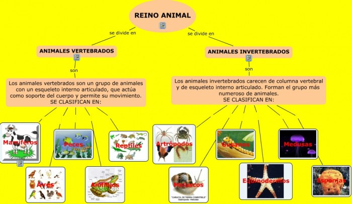EL REINO ANIMAL.cmapp