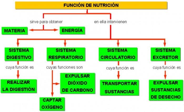 func-nutric