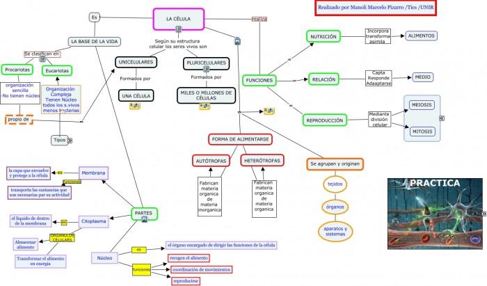 mapa conceptual manoli la celula.cmap