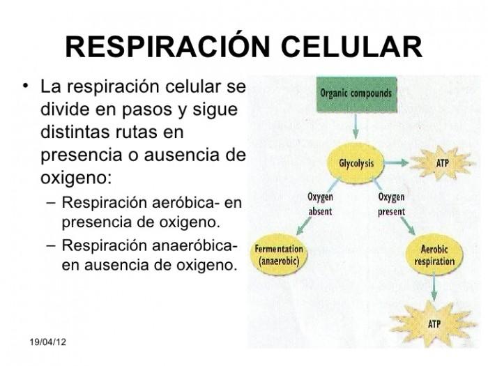 respiracion-celular-28-728