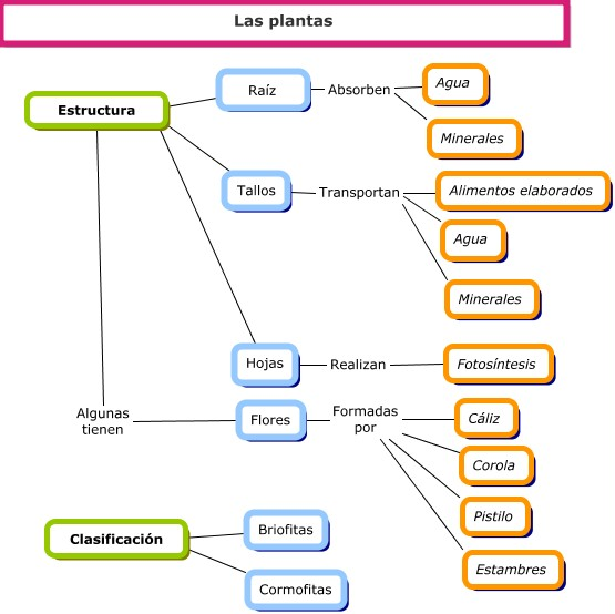 Cuadros Sin 243 Pticos Sobre Las Plantas Clasificaci 243 N Y