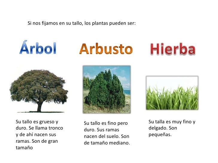 Cuadros sin pticos sobre las plantas clasificaci n y - Nombres de arbustos ...