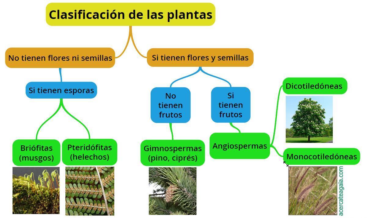 sobre las plantas: Clasificación y tipos | Cuadro Comparativo