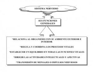 sistema-nervioso-cuadro-sinoptico-3-728