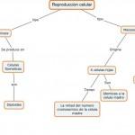 Cuadros sinópticos sobre la reproducción celular