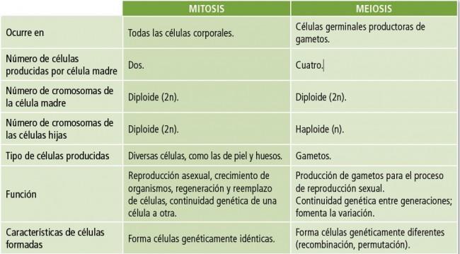 Diferencia-entre-mitosis-y-meiosis