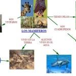 Cuadros sinópticos sobre mamíferos: Características y grupos