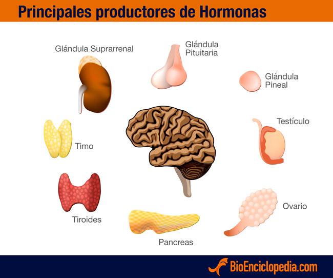 productores-hormonas