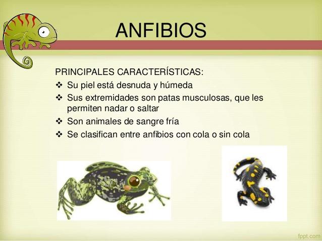 cuadros sin pticos sobre animales anfibios cuadro
