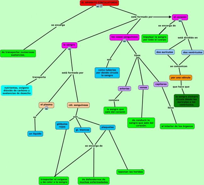 aparato circulatorio, mapa conceptual 5.cmap