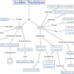 Cuadros sinópticos sobre ácidos nucleicos: Tipos
