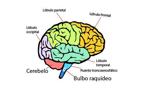 cerebro-500x350