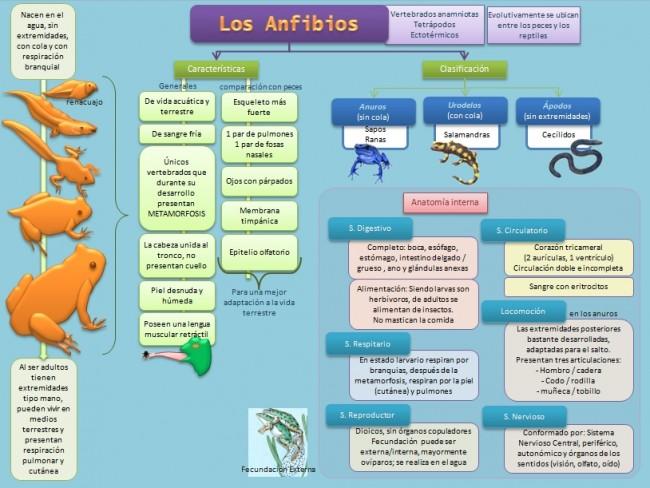 esquema-anfibios