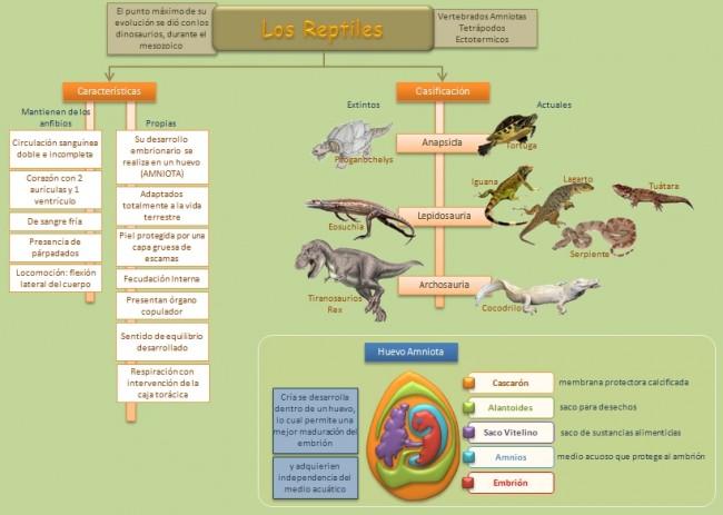 esquema-reptiles