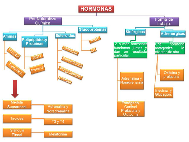 hormonas imagen