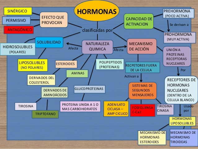 hormonas-mapa-conceptual-y-tablas-hipotalamo-hipofisis-3-638