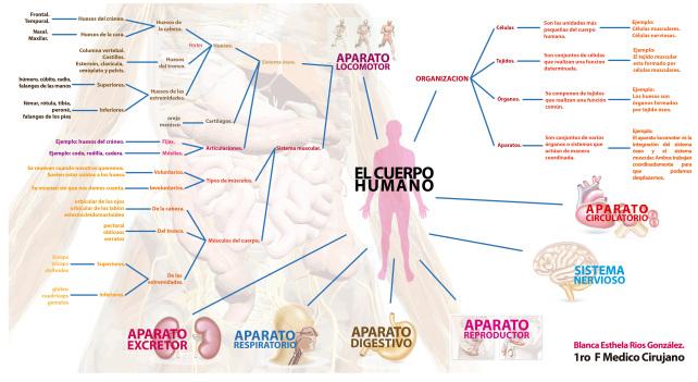 mapa_cuerpo_humano