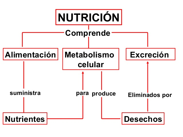 nutricin-plantas-1-638