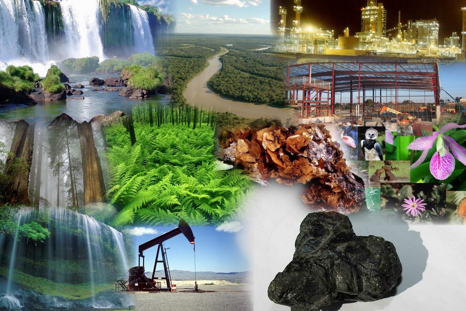 Cuadros comparativos y sin pticos sobre recursos naturales for Importancia de los viveros forestales