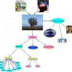 Mapas mentales y conceptuales sobre percepción