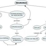 Cuadros sinópticos y mapas conceptuales sobre las neuronas