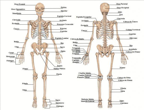 esqueleto53ebd690216d7-esqueleto-humano-large
