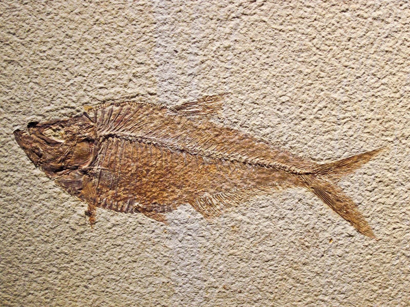 fosilpezch