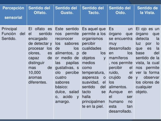 sentidoscuadro-comparativo-de-los-sentidos-2-728
