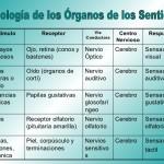 Cuadros comparativos de los órganos de los sentidos para descargar