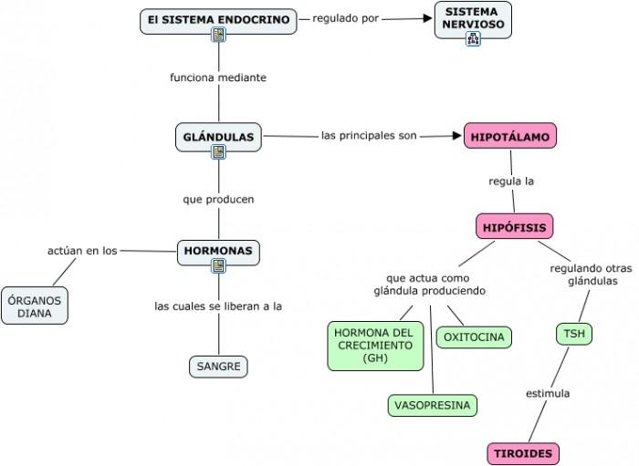 sistema endocrino.cmapmmm