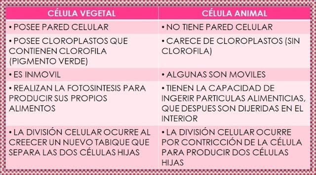 comparacion celulas