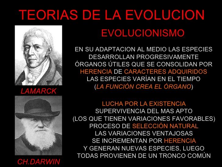 cuadroteorias-de-la-evolucion-6-728