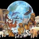 Mapa conceptual con características de los animales para descargar