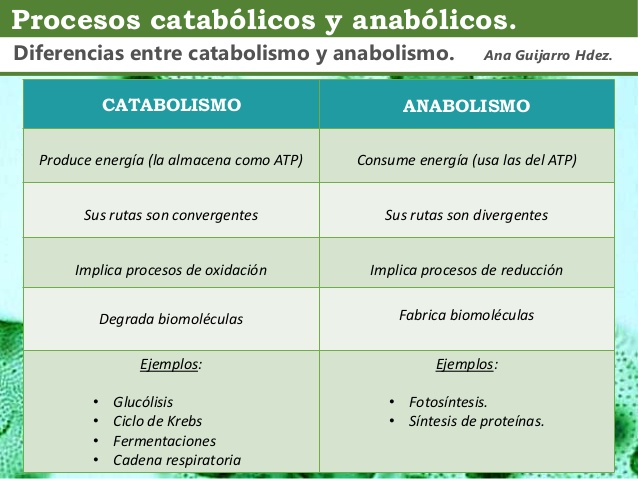 anabolica metabolica review