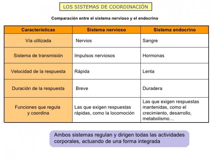 relacin-y-coordinacin-humana-i-sistemas-nervioso-y-hormonal2012-parte-1-3-728