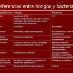 Cuadros comparativos entre Hongos y Bacterias