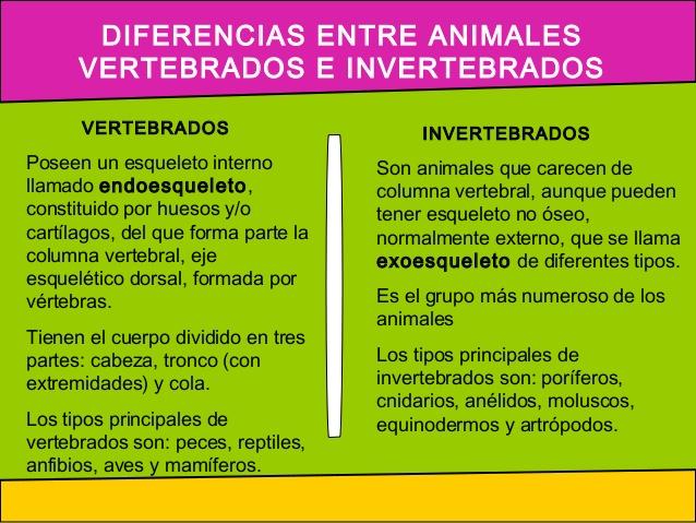 animalesaaaa-invertebrados-3-638