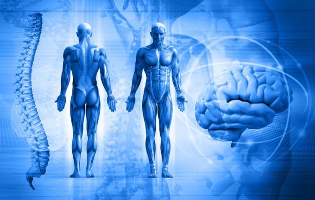 cuerpo10-curiosidades-sobre-el-cuerpo-humano_0
