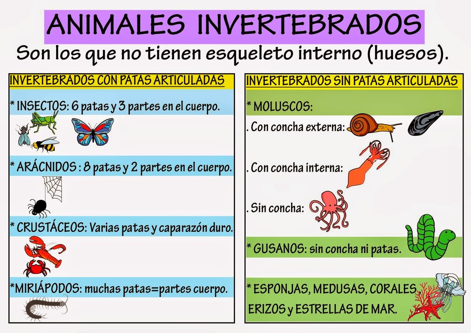 Cuadros sin pticos sobre animales vertebrados e for Caracteristicas de una habitacion