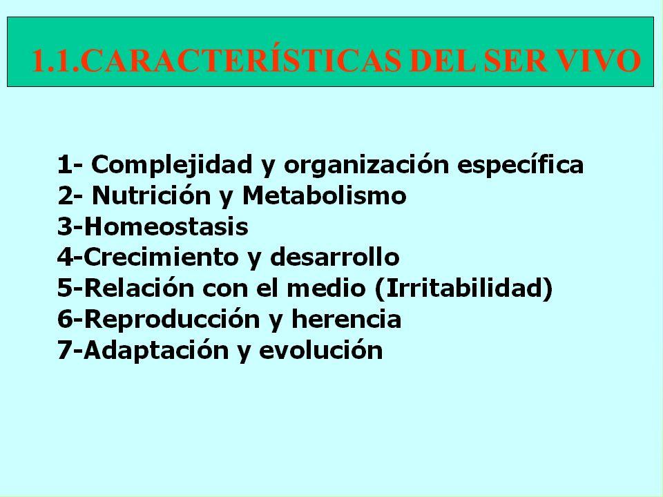 serlide_1
