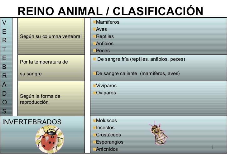 animal-vertebrados-1-728