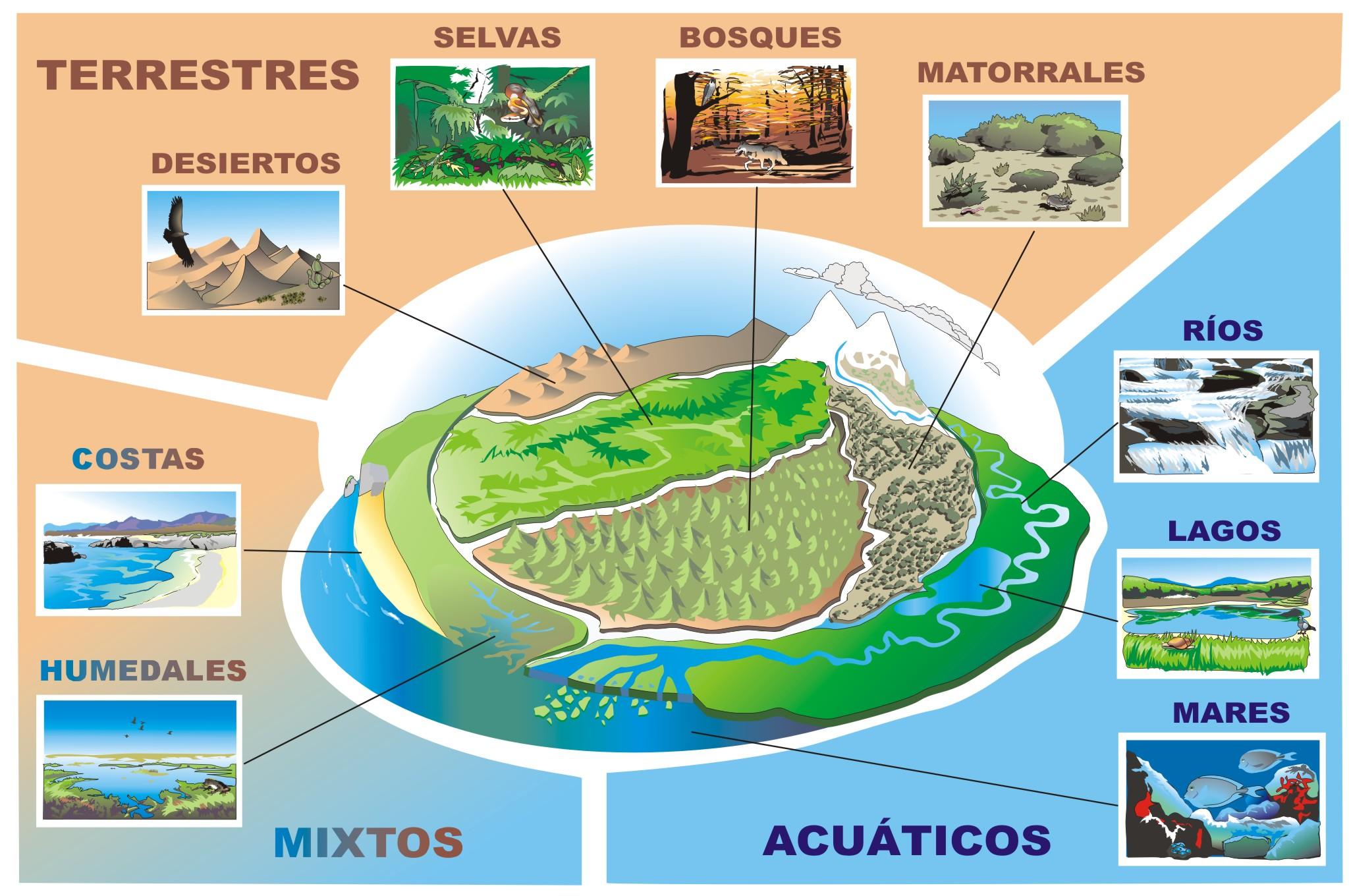 Cuadros sinpticos sobre Ecosistema y mapas conceptuales sobre