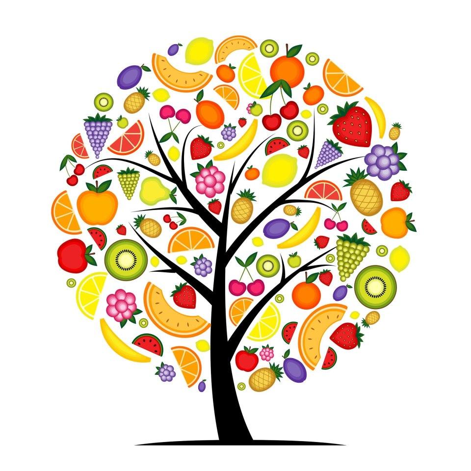 nutricion-cesat