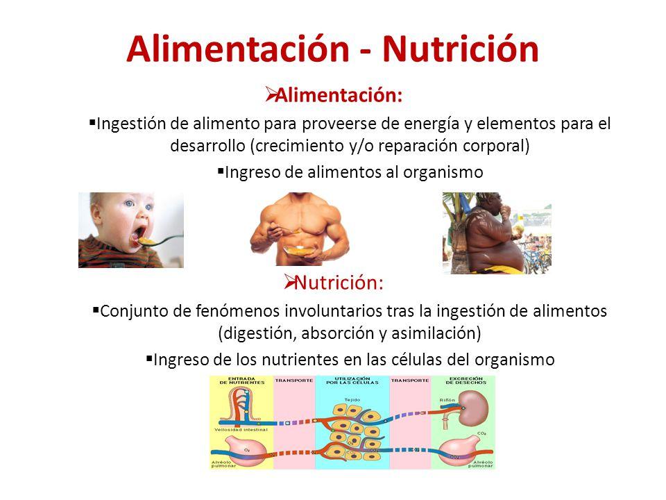 nutriciony alñimentación