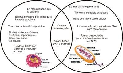 diferencia entre virus y bacterias