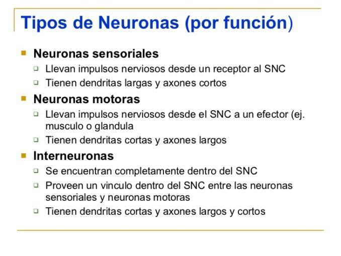 estructura-de-la-neurona-7-728