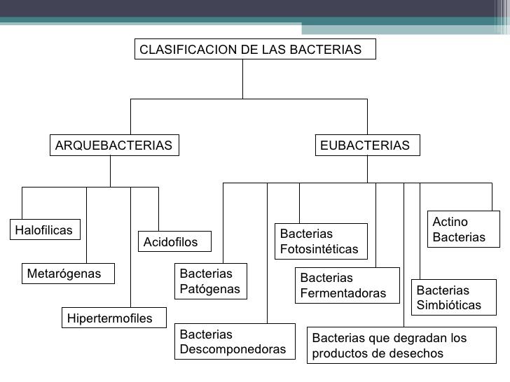 Las medicinas contra los parásitos paragon