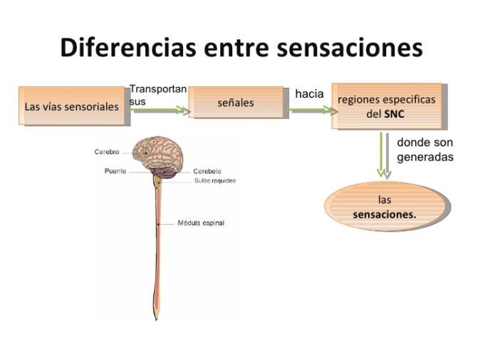 presentacion-vias-aferentes-y-eferentes-3-medio-2011-21-728